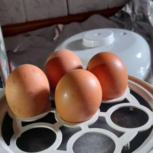 μηχανικά  καινούργιο  για γρήγορα βράσιμο αυγων