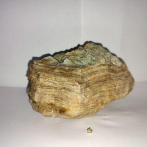 Πέτρωμα από σπήλαιο Σαλαμίνος Νο3
