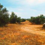 ΠΩΛΗΣΗ Οικοπέδου Δροσιά Χαλκίδος 2,5 Στρέμματα