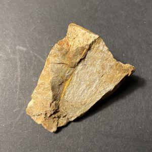Ορυκτό απολίθωμα Ξυλοοπάλιος