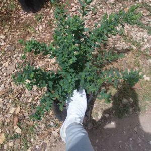 Φυτά  ( πολυγαλα )