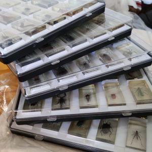 """Συλλογή """"Έντομα"""" της DeAgostini"""