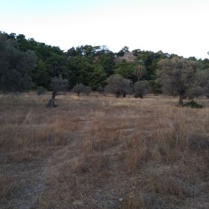 For sale land-field full of olive trees 91.400 sq.m.  Πωλείται όλος μαζί αγρος - γη με ελαιόδεντρα 91.400 τ.μ. αρτιο-οικοδομησιμο.