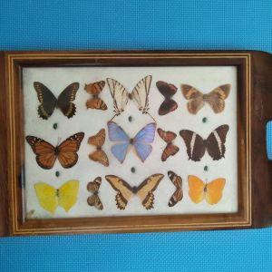 Δίσκος σερβιρίσματος με πεταλούδες