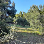 Πωλείται αγροτεμάχιο στην Ελιά Χαλκιδικής πριν τα Λαγόμανδρα