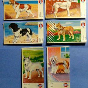 Αυτοκόλλητα Chipita - ράτσες σκύλων
