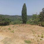 Οικόπεδο 2 στεμμάτων  Δάφνη Κέρκυρας