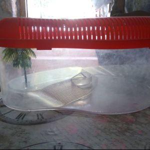 Ενυδρείο για χελωνάκι