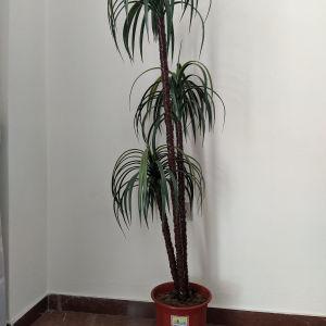 Τεχνητό φυτό.