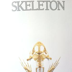 Eyewitness Guides - Skeleton