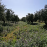 Πωλείται οικόπεδο-αγροτεμάχιο 5400 m2