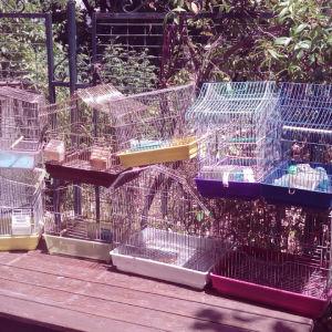 Κλουβια. πουλιων