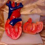 -*ΜΙΑ ΚΑΡΔΙΑ ΖΗΤΑ ΑΓΑΠΗ ΚΑΙ ΝΕΑ ΒΙΒΛΙΟΘΗΚΗ*- (Εκπαιδευτικο Προπλάσμα Καρδιας σε 2 μερη)