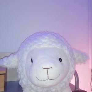κουμπαράς πρόβατο