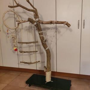 Πάρκο - δένδρο παπαγάλου