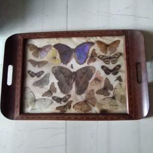 δισκος με συλλογη πεταλουδες