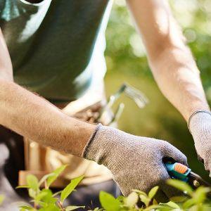 Καθαρισμός & συντήρηση κήπων και οικοπέδων