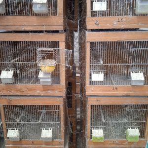 Κλουβιά ζευγαρώστρες για πουλιά