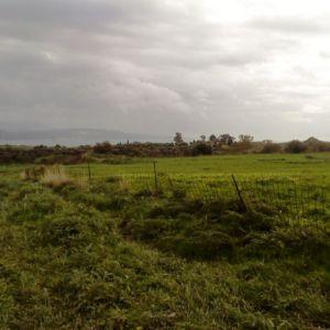 Αγροτεμάχιο , 5 χιλ. απο το Ληξούρι 750 μ απο την παραλία Ξι, φως, νερό, τηλέφωνο, ιντερνέτ , τοποθεσία Καλαμάκι, κοινότητας Κατωγής, Ληξουρίου.