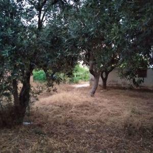 Οικόπεδο 289 τ.μ Πάτημα Χαλανδρίου