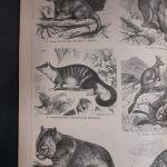 Γραβουρες 2 τεμαχια του 1888