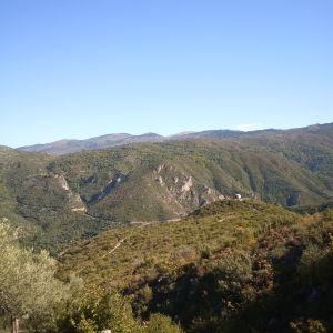 Πωλειται κτήμα , 10 στρεμμάτων στη θέση Αμπέλια στο καρβέλι Μεσσηνίας, ποτιστικό, με νερό, λίμνη, αποθήκη, αμπέλι, κερασιες, καστανιές,αχλαδιές.Τιμη:30.000€