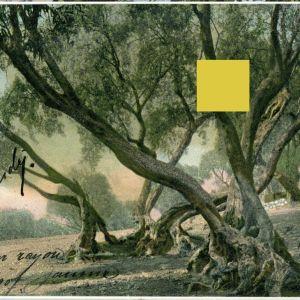 Συλλεκτική Καρτ Ποστάλ νο.3 του 1900 απο το καλλιτεχνικό φωτογραφείο Ιωάννη Ιωαννίδη. Ιταλικό Ταχυδρομείο Ιωαννίνων. Ταχυδρομημένη το 1907 με σφραγίδα φωτογράφου. Ιωάννινα Ioannina Janina Ήπειρος