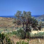 Άνδρος οικόπεδο 2.300 τ.μ. Άνω Γαύριο