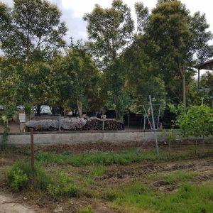 Πώληση Μονοκατοικίας (μικρής μεζονέτας)στο Τ.Δ. Βρυσακίου ΑΛΕΞΑΝΔΡΕΙΑ ΗΜΑΘΙΑΣ