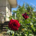 Παλιά εξοχικη ή μόνιμη κατοικία στον Παρνασσό με κτήμα και ελαιώνα 4 στρεμματα