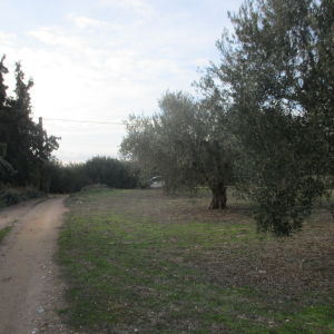 Πωλείται αγροτεμάχιο 2 στρέμματα στήν Χαλκιδική περιοχή Αναστασίτικο Δήμου Πολυγύρου