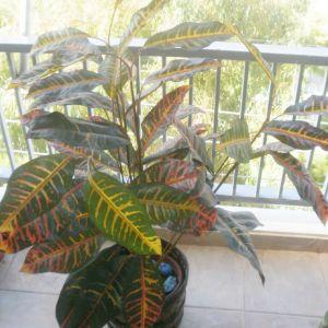Ψάθινο καλάθι μπαμπού ύψους 50εκ και διακοσμητικό πολύχρωμο λουλούδι με γλάστρα ύψους 1,20μ. Μαζί με δυο ακόμα ψάθινα μπαμπού καλάθια για διάφορες χρήσεις.