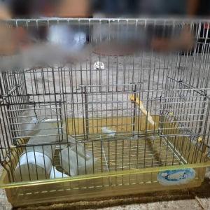κλουβι για πτηνό